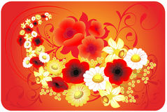 Flowers on a red background Royalty Free Stock Images