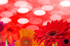 Flowers on red background with bokeh effect Royalty Free Stock Photos