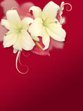 Flowers on Red Background Royalty Free Stock Photo