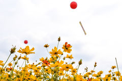 Flowers. The flowers with red balloon stock photography