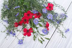 Flowers of red and blue flax with buds Royalty Free Stock Photo