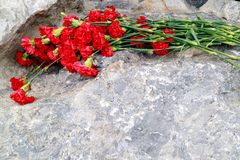 Flowers red carnations lying on the stone. Flowers in memory of the victims royalty free stock images