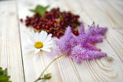Flowers and red currant Royalty Free Stock Images
