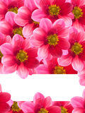 Flowers with red petals Stock Images