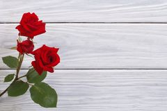 Flowers red roses framed wooden surface Stock Images