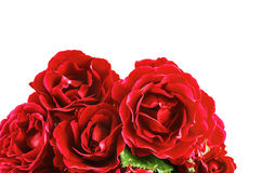Flowers red roses on a white background Stock Image