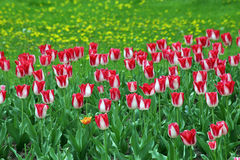 Flowers. Royalty Free Stock Images