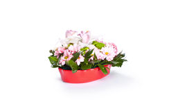 Flowers in red vase Stock Images
