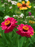 Flowers  red  yellow  petals Royalty Free Stock Image