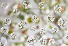 Flowers reflect in water drops Royalty Free Stock Photography