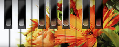 Flowers reflection and keyboard Stock Photography