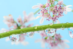 Free Flowers Reflection On Water-drop Stock Images - 9523354
