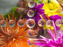 FLOWERS REFRACTION 16 Stock Image