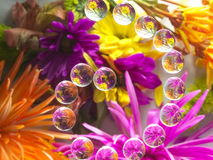 FLOWERS REFRACTION 13 Royalty Free Stock Photos