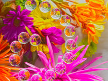FLOWERS REFRACTION 15 Royalty Free Stock Photography