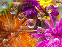 FLOWERS REFRACTION 18 Stock Photo