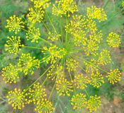 flowers remind me of mandala ornament Royalty Free Stock Image