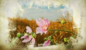 Flowers - retro style flowers - pictur Stock Photos