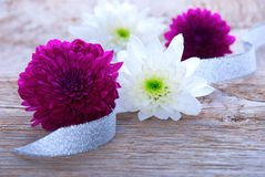 Flowers and Ribbon as Background Royalty Free Stock Photography