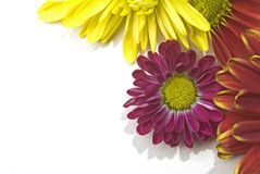 Flowers right corner Royalty Free Stock Image