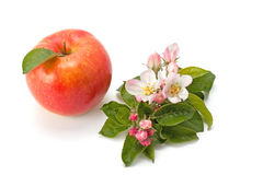 Flowers and ripe apple Stock Photos