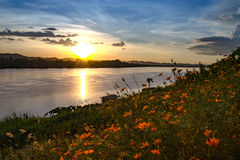 Flowers on river background Royalty Free Stock Image