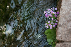 Flowers by the river Stock Image