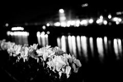 Flowers river Florence mono Royalty Free Stock Images