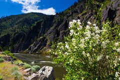 Flowers by River in Idaho stock image