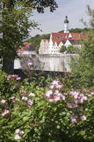 Flowers at the river of Landsberg am Lech Stock Photography