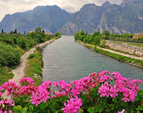 Flowers, river and mountains Stock Photography