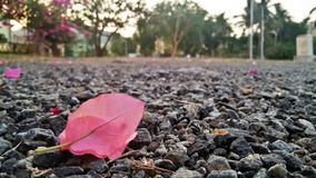 Flowers on road. Paper flower on road with stones Stock Image