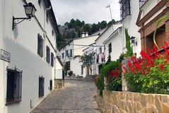 Flowers on the road, Spain Stock Image