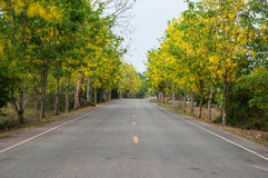 Flowers by road. In thailand Stock Images