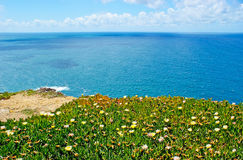 The flowers on the rock of Cape Roca Royalty Free Stock Images