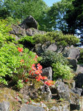 Flowers and rocks. A summer aspect from a Japanese garden Stock Images
