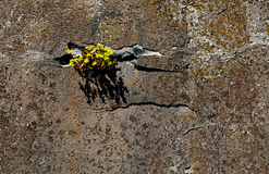 Flowers on the rocks Royalty Free Stock Photography