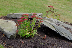 Flowers and Rocks Garden Arrangement. Red flowers and rocks artfully arranged in yard setting Royalty Free Stock Photo