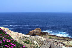 Flowers, Rocks and the Sea. A cliff with purple flowers and the ocean stock photo
