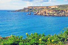 Flowers, rocks and sea. Mediterranean landscape, Malta Stock Photos