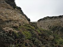 Flowers in the Rocky Canyon. At Montana de Oro State Park, Los Osos, California Royalty Free Stock Photo