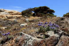 Flowers in rocky landscape Stock Images