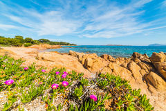 Flowers in Romazzino beach. Sardinia Stock Photo