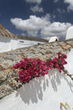 Flowers at a roof Stock Image