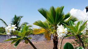 Flowers on the beach in Kenya. Flowers on the roof in Mombasa Kenya Stock Photo
