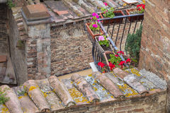 Flowers on the roof Royalty Free Stock Image