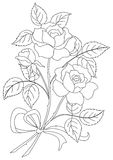 Flowers Rose, Contour Royalty Free Stock Images