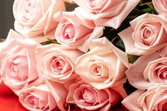 Flowers of a rose of gentle pink color in a large number stock photo