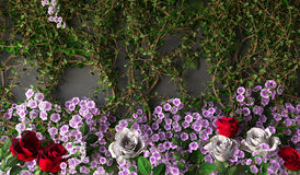 Flowers rose holiday background Royalty Free Stock Images