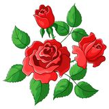 Flowers roses. Red buds and green leaves Royalty Free Stock Images